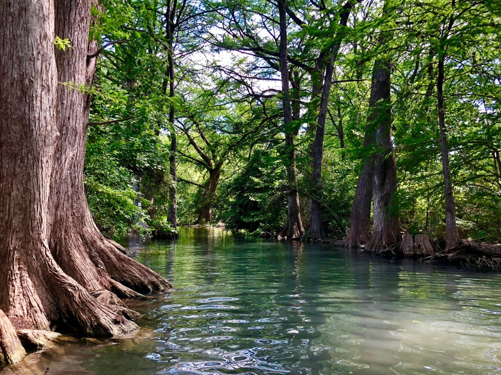 Guadalupe River in Texas lined with cypress trees