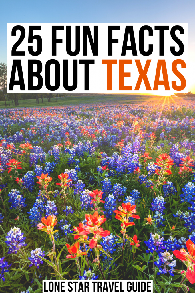 "Field of Texas wildflowers at sunset, black and orange text on a white background reads ""25 fun facts about texas"""