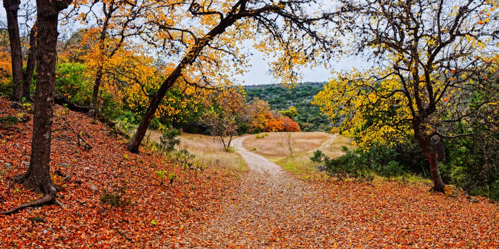 Lost Maples State Park in central texas during fall foliage season, one of the best central texas day trips from austin
