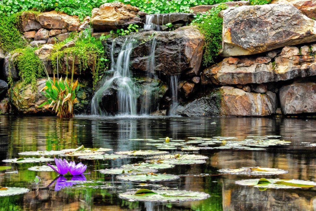 Small waterfall with a lily pad in the foreground in the Dallas Arboretum, one of the most instagrammable places in dallas tx