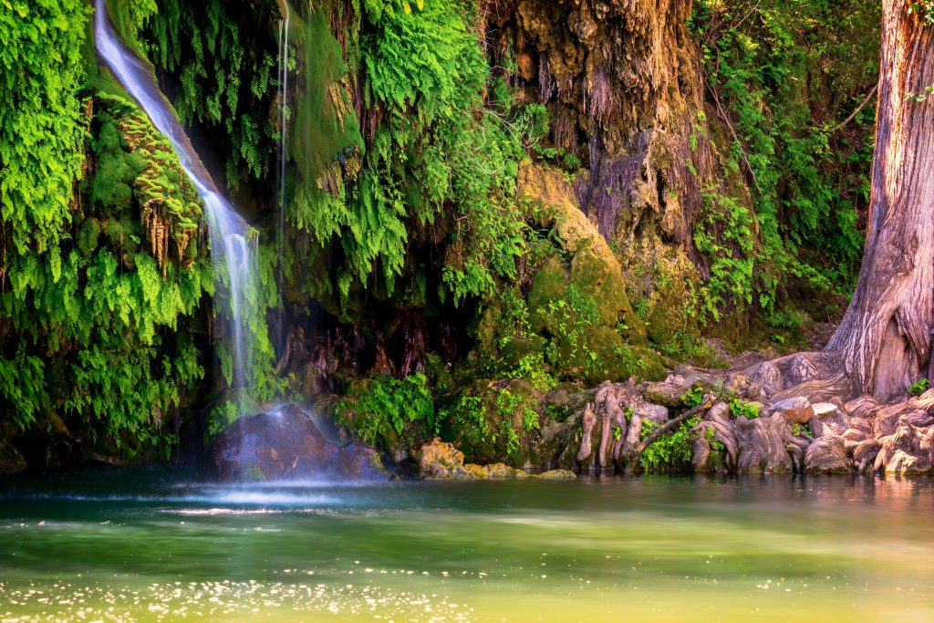 Krause Springs in Spicewood with a small set of falls visible in the back left among foliage