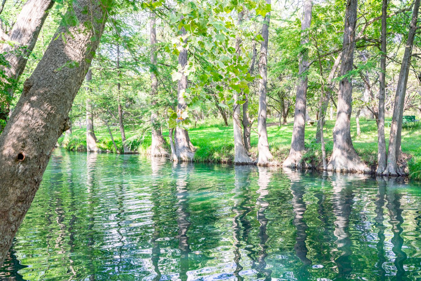 Blue Hole in Wimberley TX with no people visible showing the reflections of the cypress trees in the water, one of the best texas swimming holes