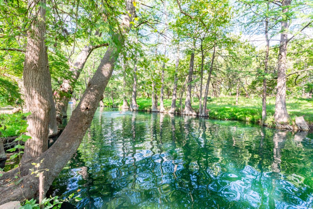 View of the Blue Hole in Wimberley Texas with a cypress tree prominent on the left side of the photo