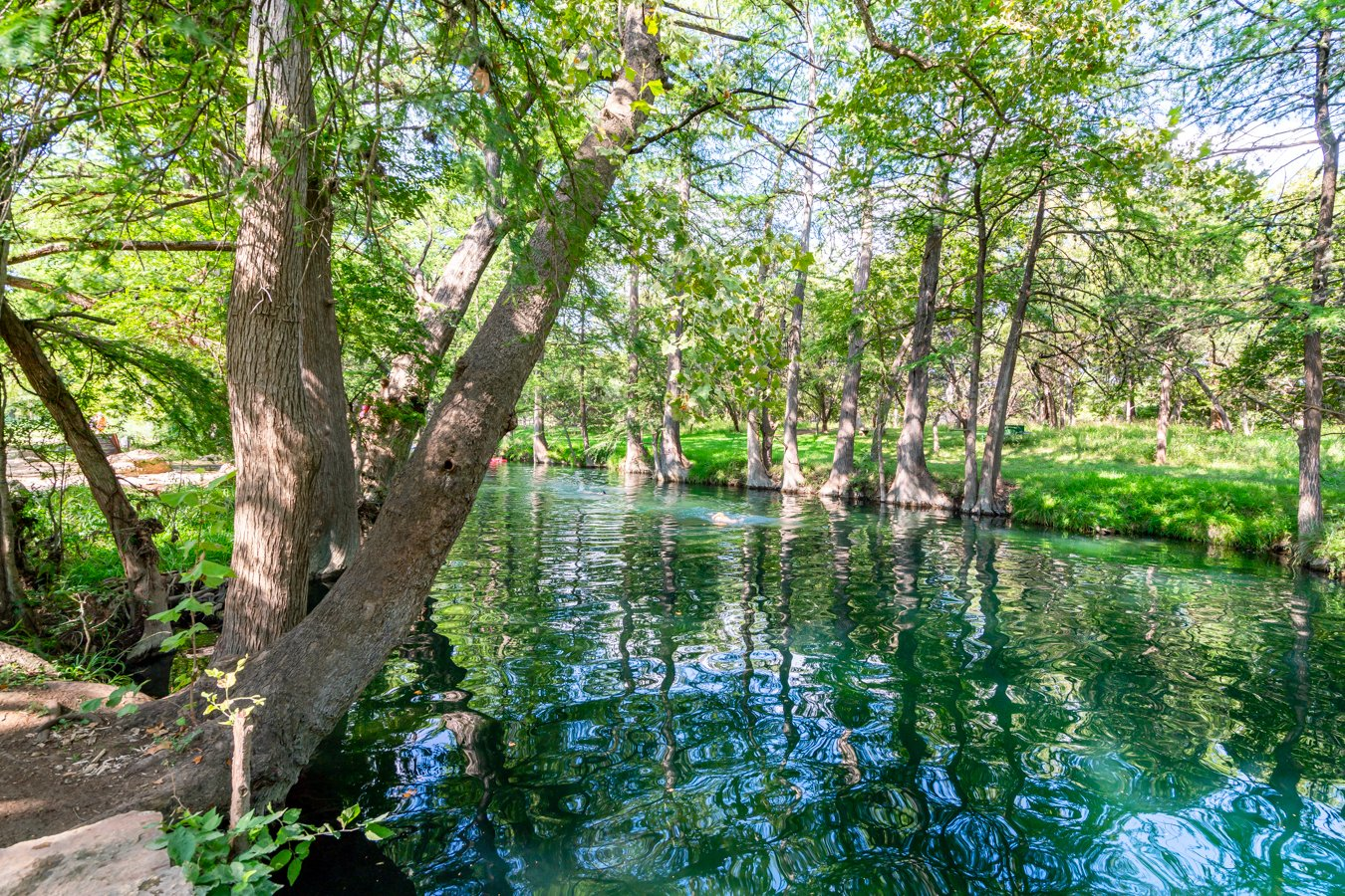 view of the blue hole wimberley from the shore, one of the best things to do in the texas hill country