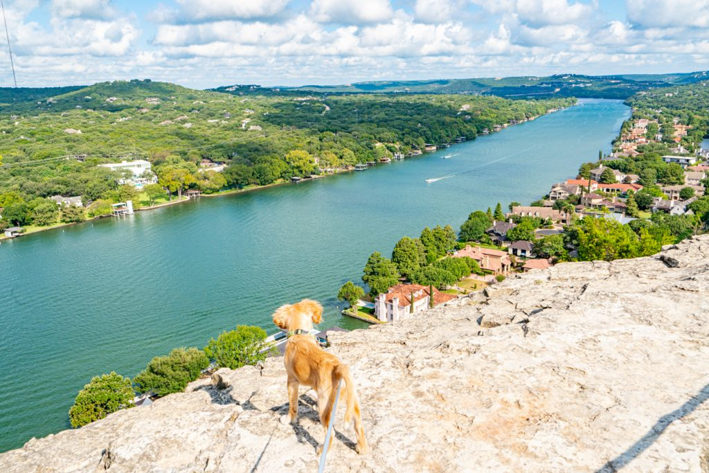 View of a yellow puppy overlooking Lake Austin at Mt Bonnell Austin TX