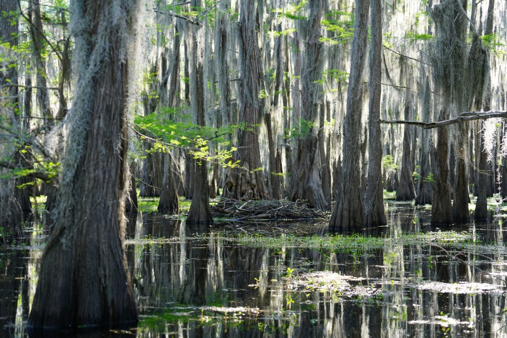 Caddo Lake, with Spanish moss hanging from the trees in the background and the lake in the foreground