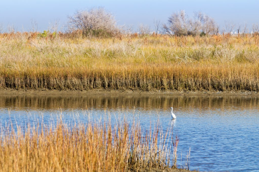 Marsh in Galveston Island National Park with a white bird resting on the water