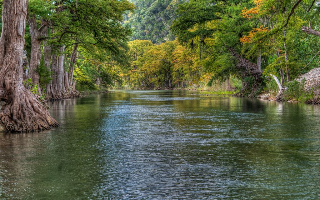 Guadalupe River lined with cypress trees, visiting here is one of the most fun things to do in New Braunfels TX
