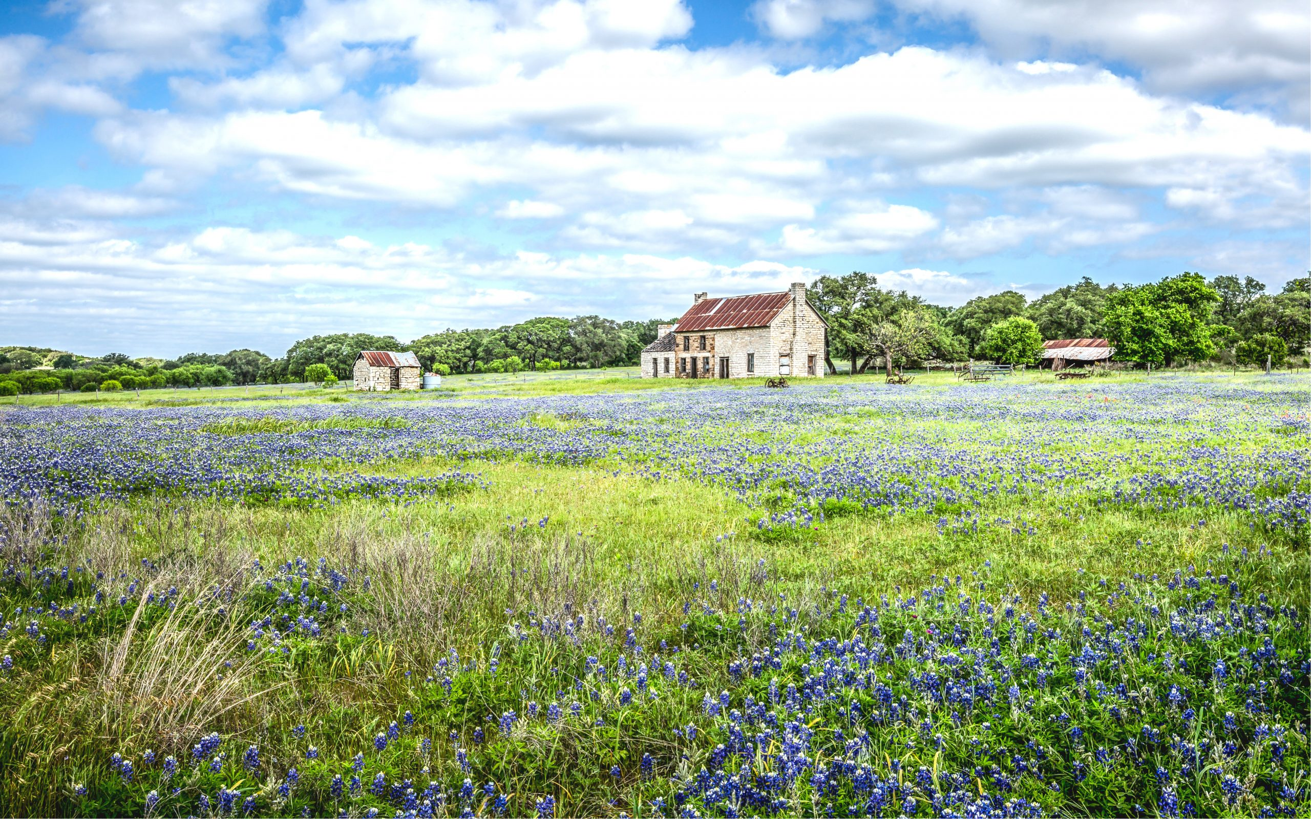 19th century farmhouse in marble falls tx with a field of bluebonnets in the foreground. Visiting this scenic spot is one of the most fun things to do in marble falls tx