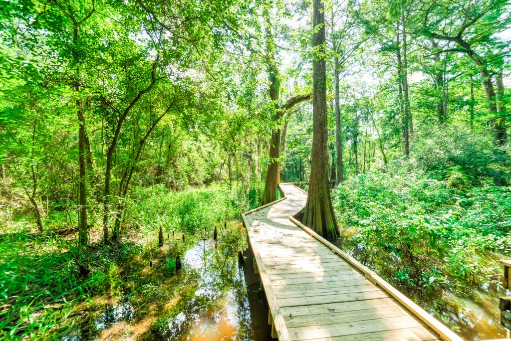Wooden boardwalk among the cypress trees at Jesse H. Jones Nature Center, home to some of the best hikes near houston tx