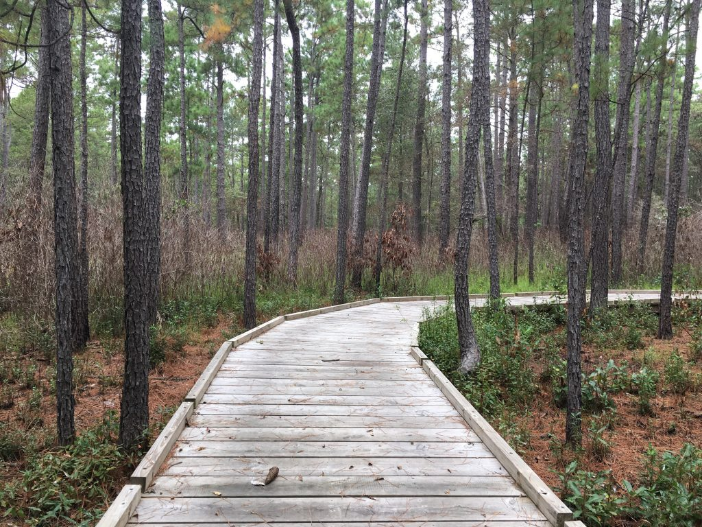 Boardwalk among pine trees in Big Thicket National Preserve, home to some of the best hiking near houston tx