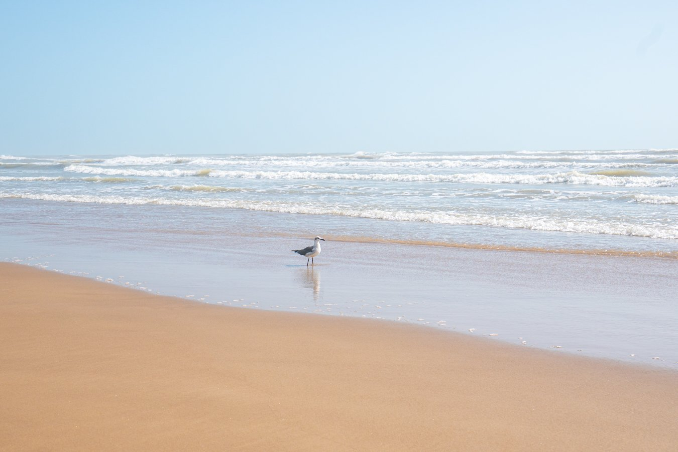 Seagull on the beach in South Padre Island with the surf in the background. Going to the beach is one of the best things to do South Padre Island TX