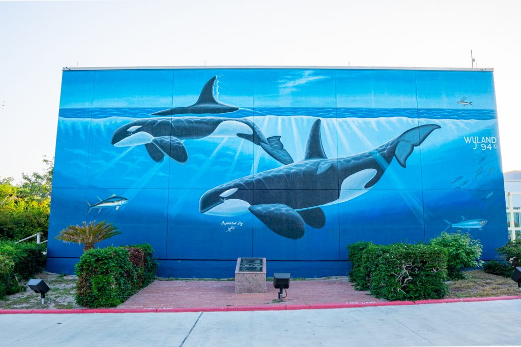 Mural of two orcas at the south padre island convention center, one of the best photography locations in south padre island