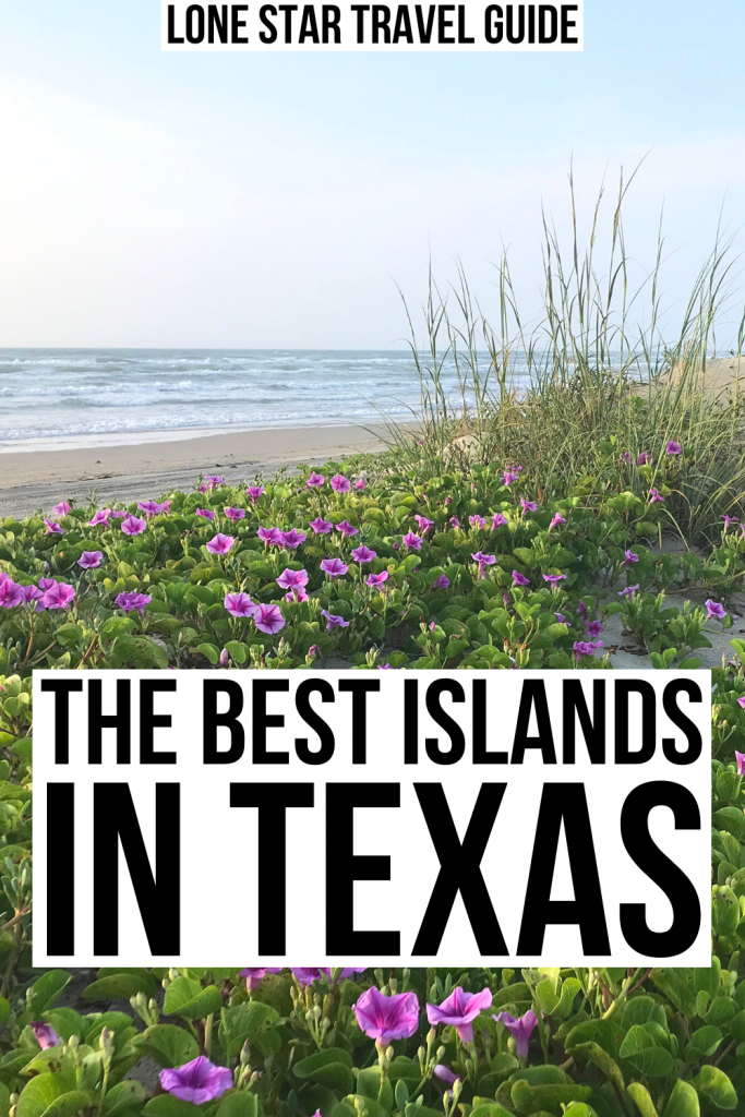 "photo of purple flowers on padre natioanl seashore, black text on a white background reads ""the best islands in texas"""