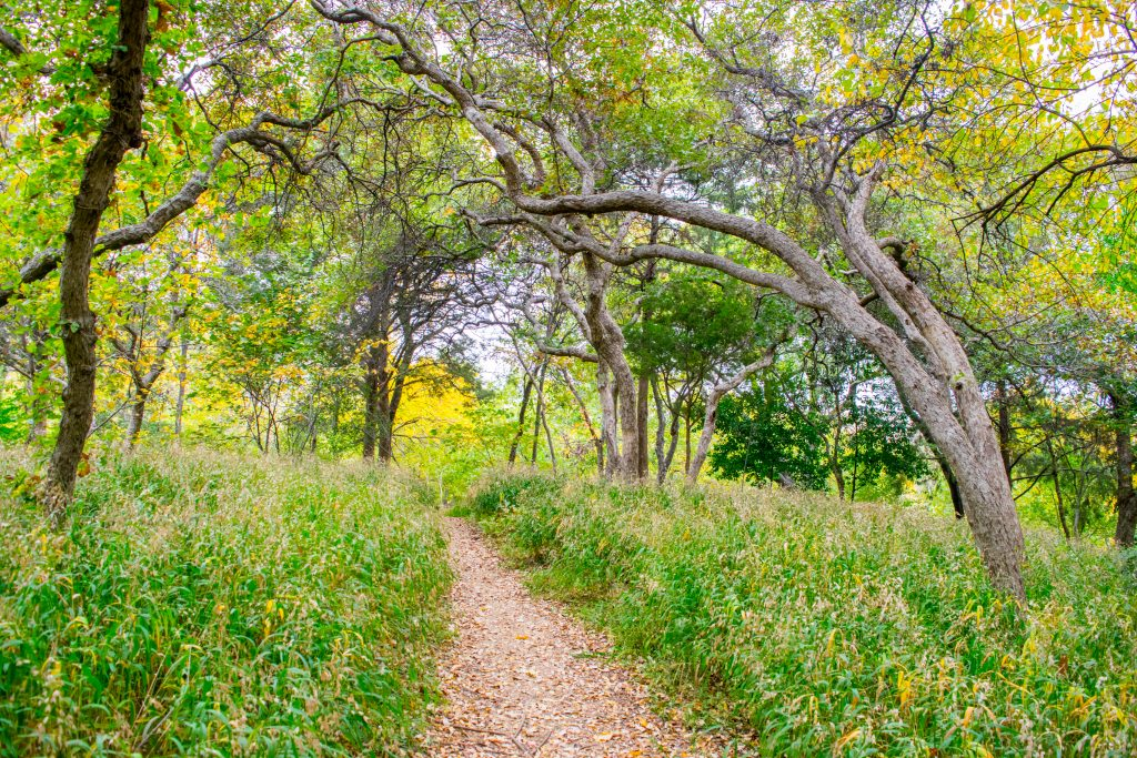 Hiking trail in Dallas tx lined with oak trees and green grasses