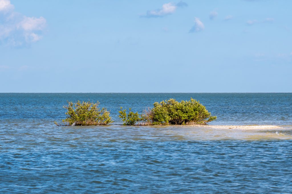 Small island with shrubbery poking up from the ocean near rockport texas