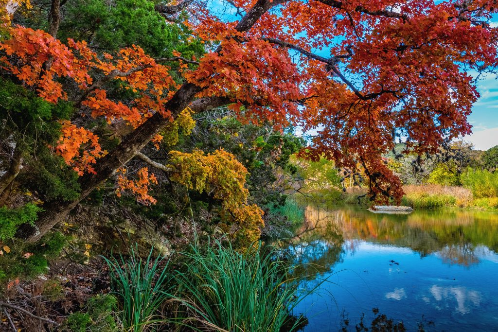 fall foliage in lost maples state park texas with a pond to the right side of the photo
