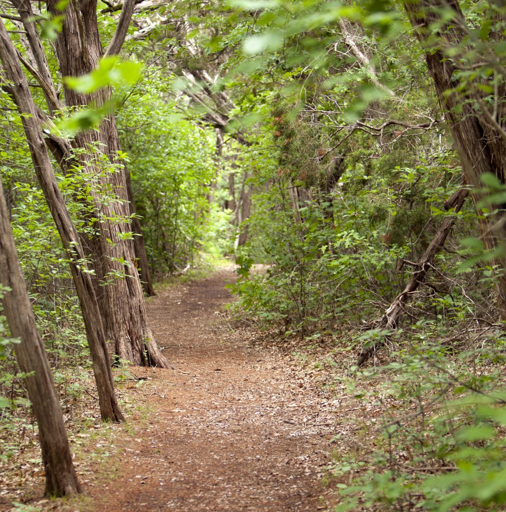 wooded trail surrounded by trees in mother neff state park, one of the best texas state parks close to dallas tx