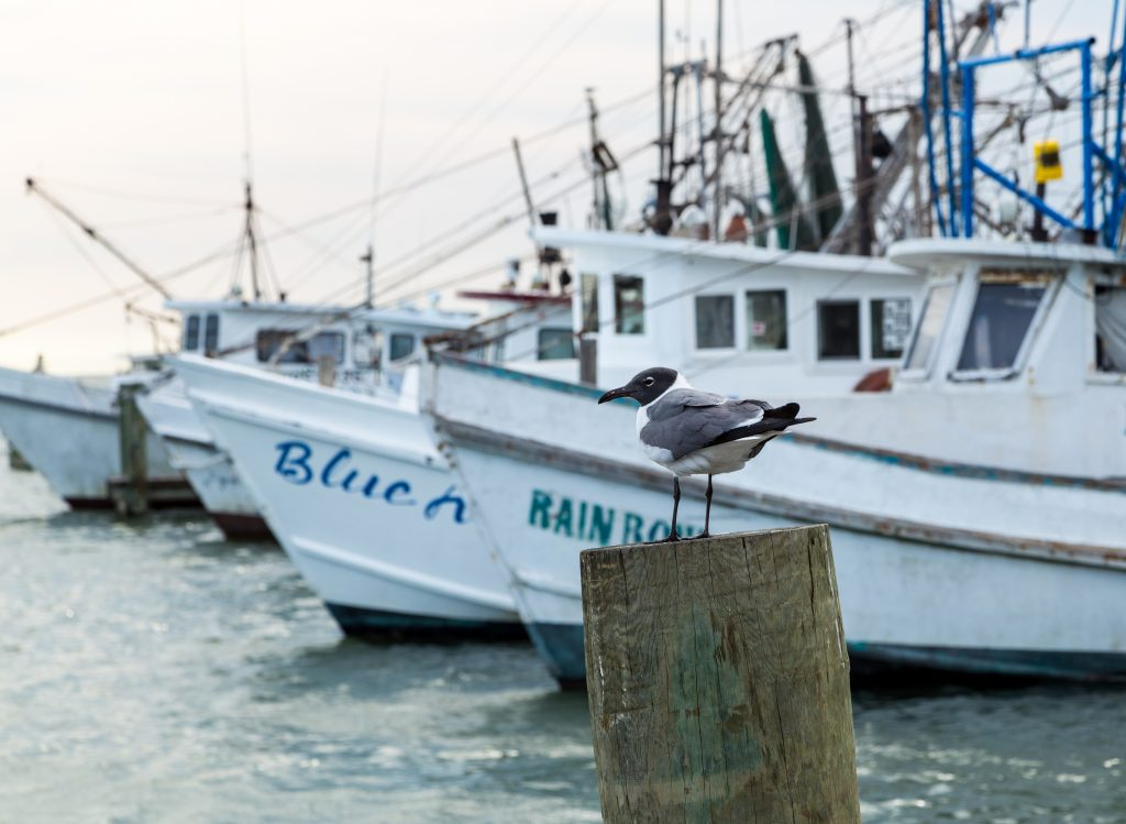 Fishing boats with a bird on a column in the foreground. fishing belongs on any list of what to do in rockport tx