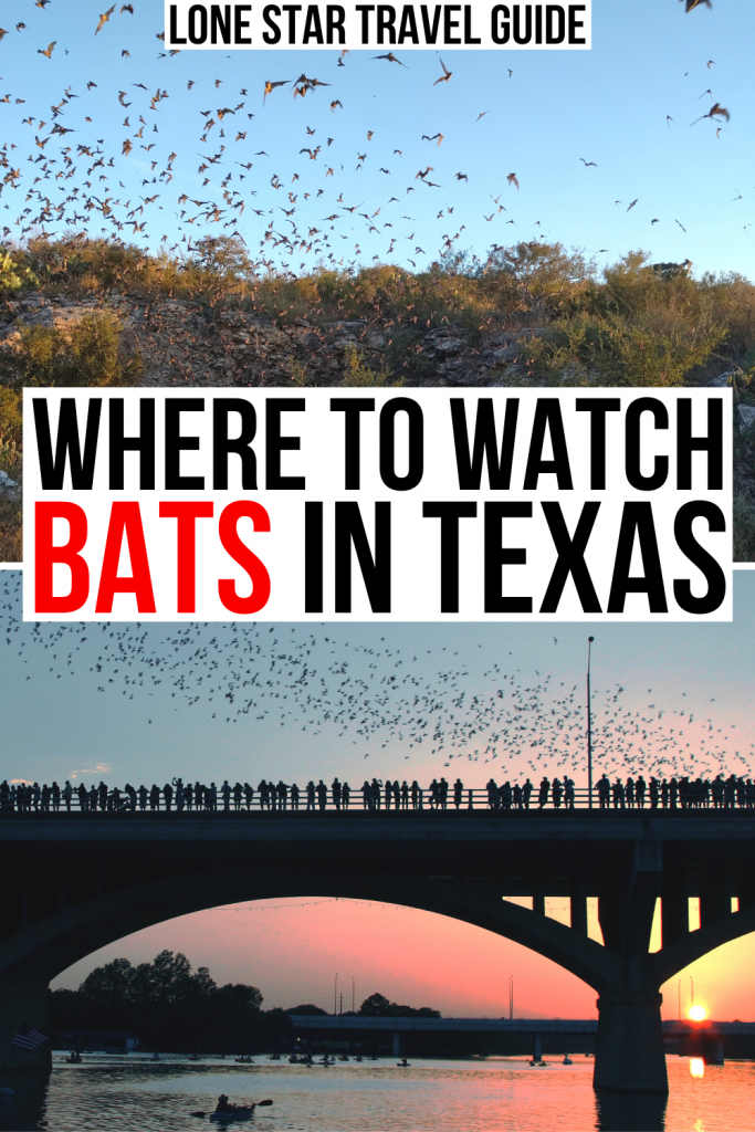 "2 photos of texas bats, one in a state park and one at congress avenue bridge in austin. black and red text on a white background reads ""where to watch bats in texas"""