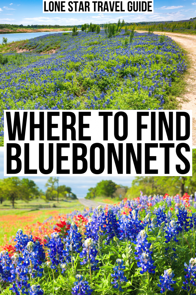 "two photos of wildflowers, muleshoe bend and country road. black text on a white backgrounds reads ""where to find bluebonnets"""