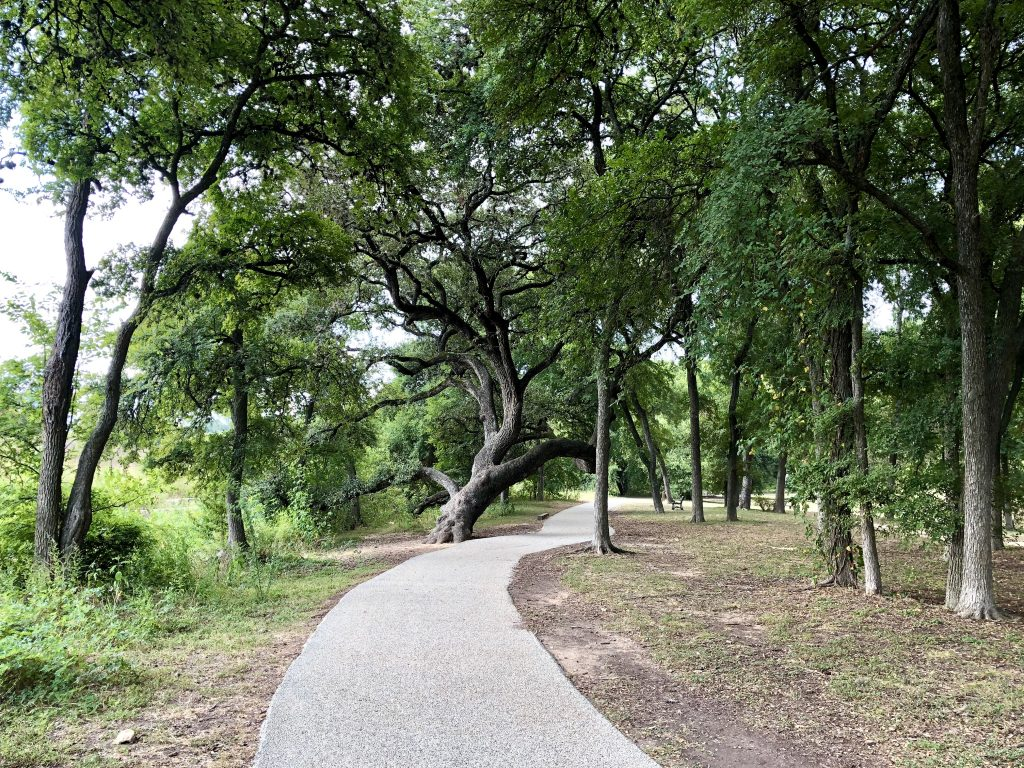 paved section of shoal creek trail shaded by oak trees
