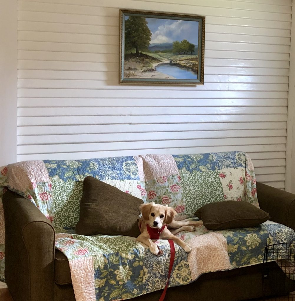 Ranger sitting on a couch at the peach tree inn, one of the best inns in fredericksburg tx