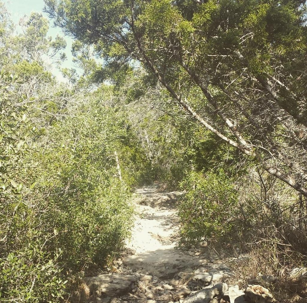 one of the best hikes in san antonio as seen from a limestone trail surrounded by trees