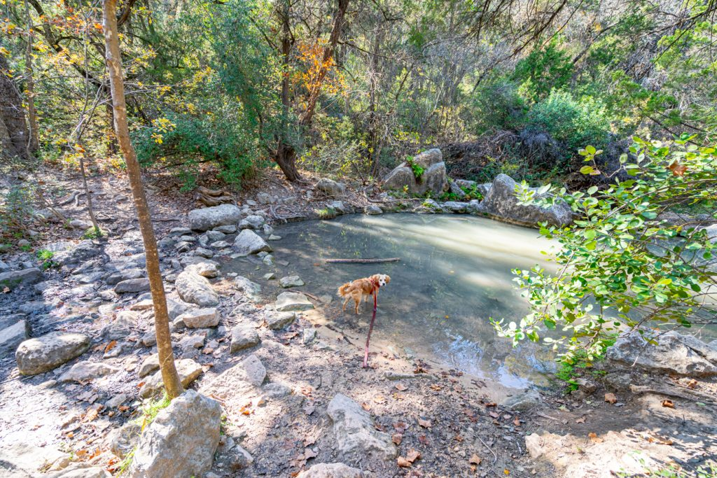 Ranger hiking in Austin along Turkey Creek trail, puppy is standing in a pool of water
