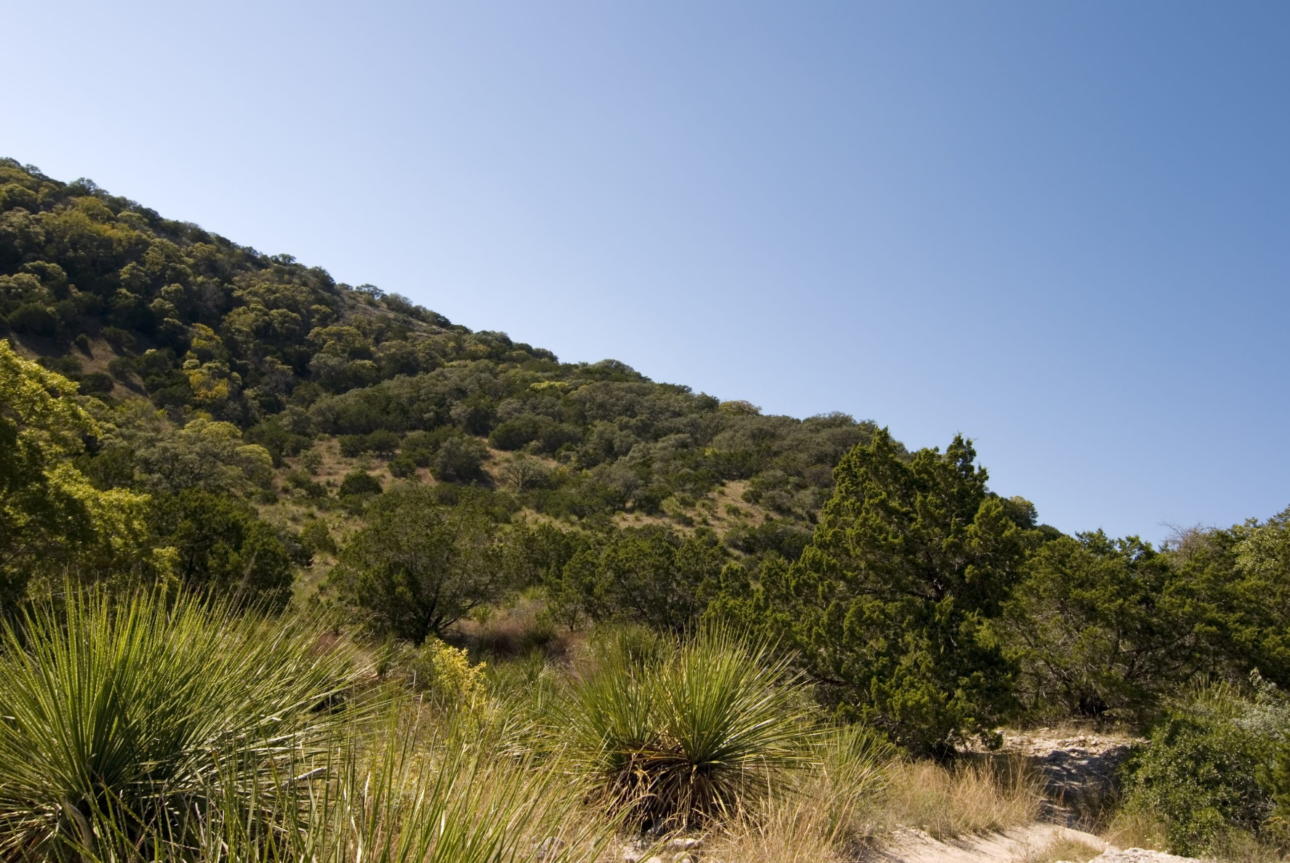 views of the texas hill country when hiking near san antonio texas under a bright blue sky