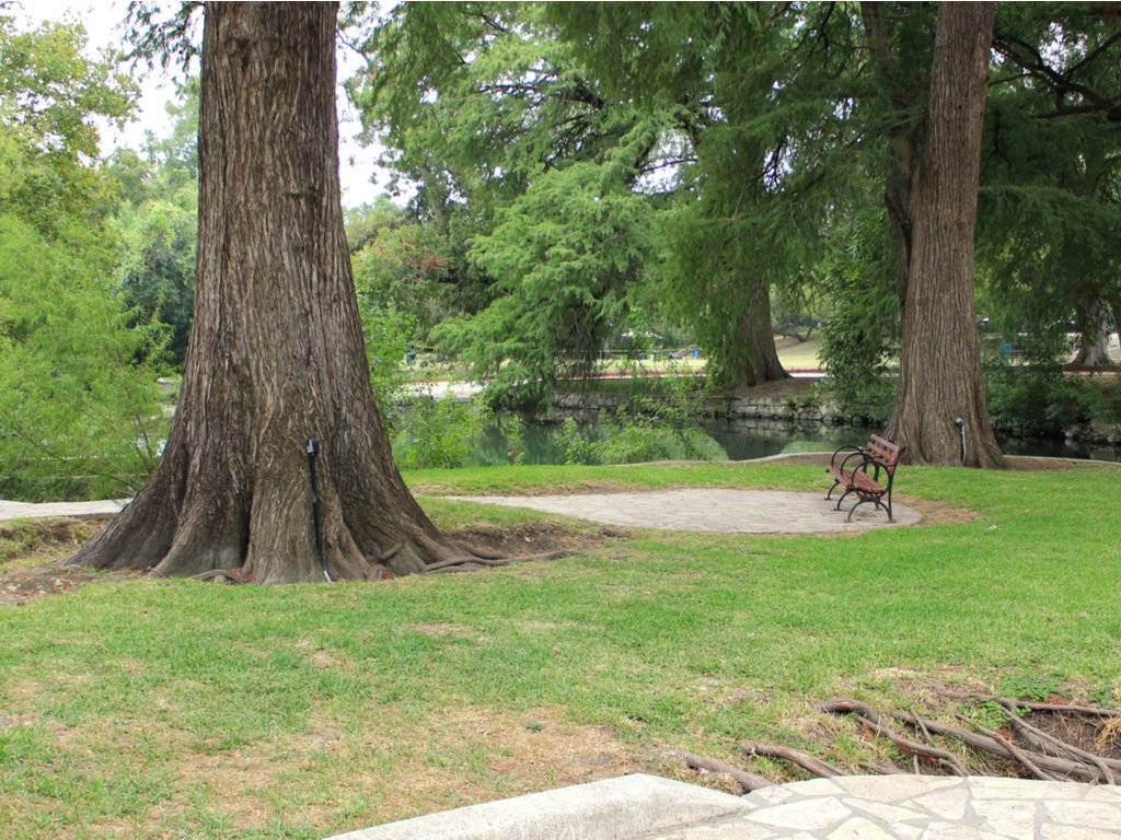 2 oak trees on a green lawn in braceknridge park, one of the best places to go hiking in san antonio tx
