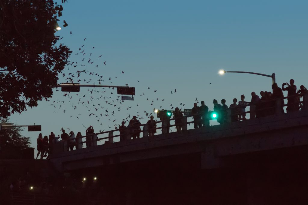 spectators watching bats from waugh drive bridge in houston