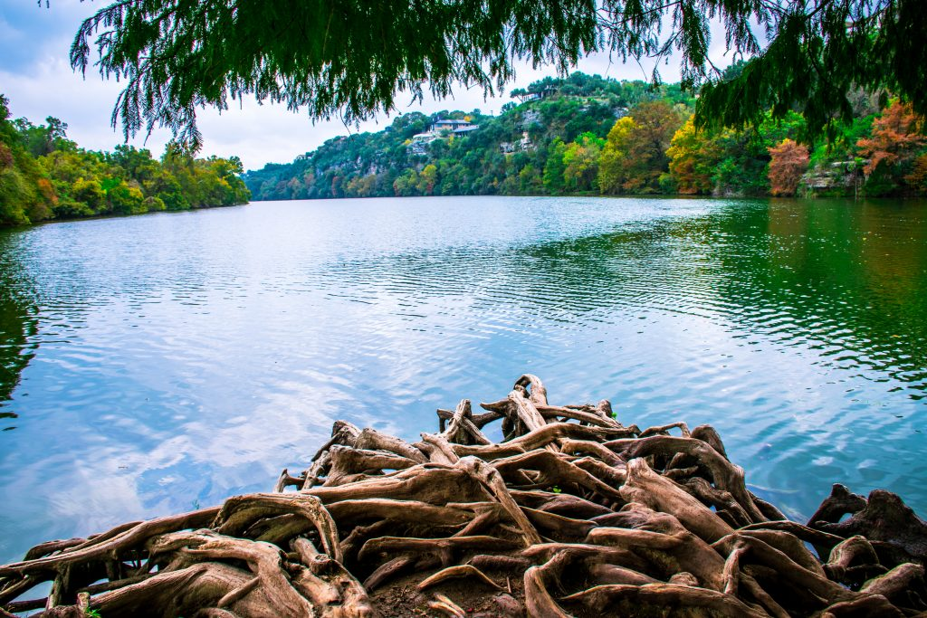 view of lady bird lake from red bud isle with tree roots in the foreground