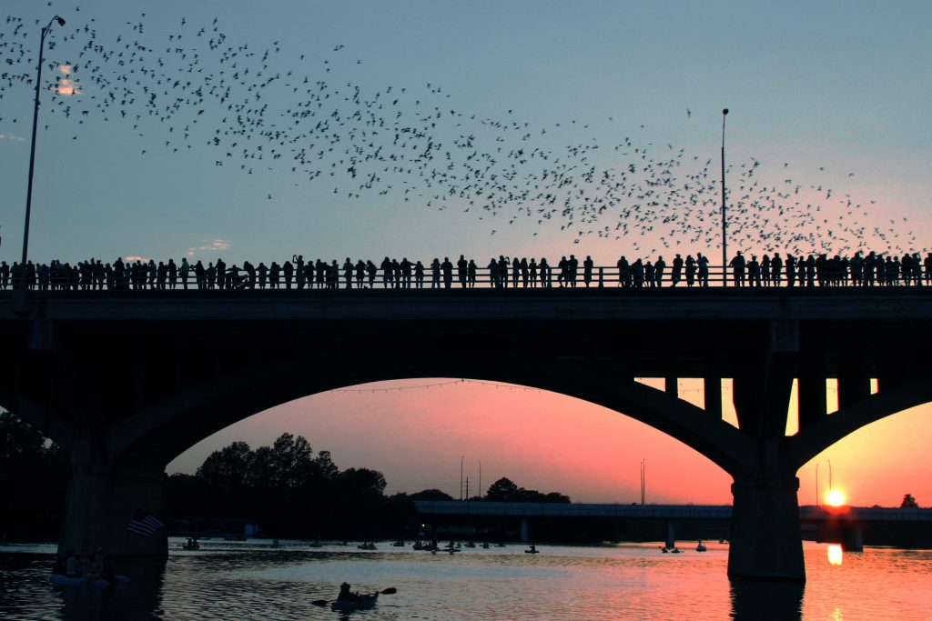 people standing on south congress bridge with bats flying above the bridge