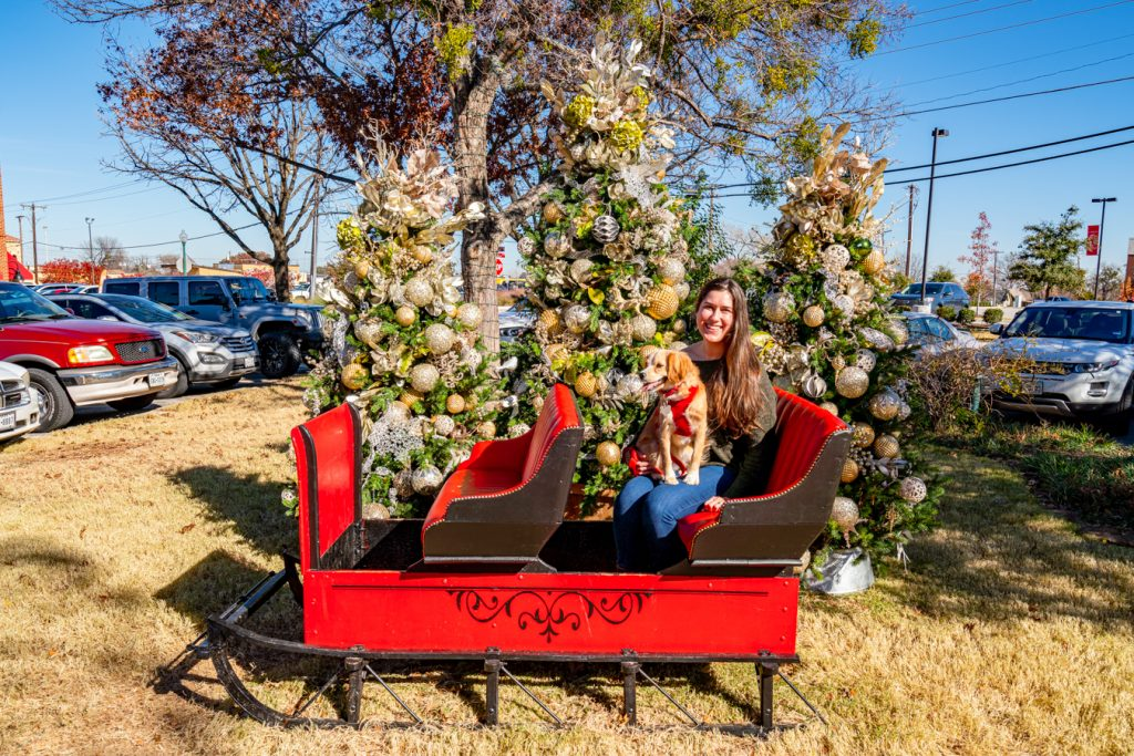 kate storm and ranger storm sitting in a sleigh during christmas in grapevine tx