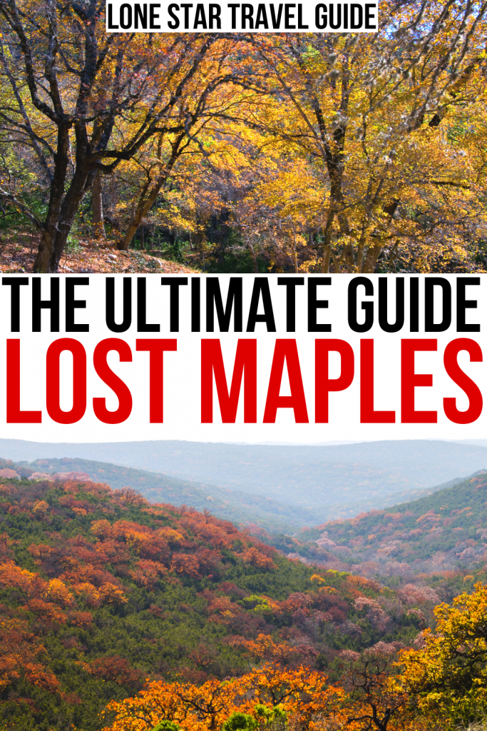 2 photos of fall foliage at lost maples state natural area, black and red text on a white background reads the ultimate guide lost maples texas