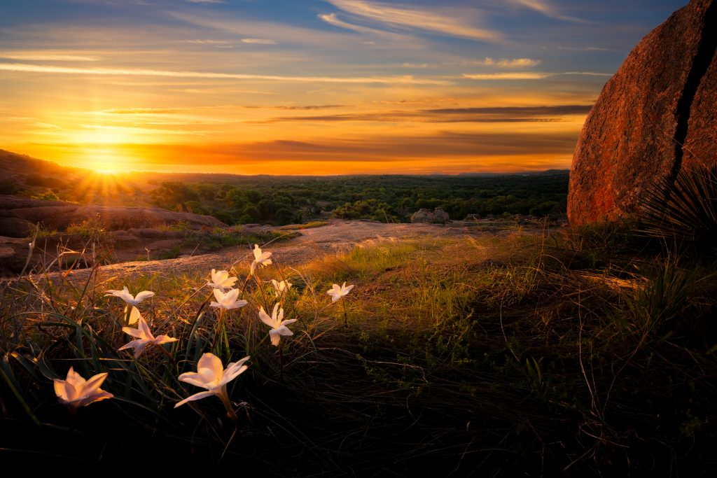 sunset in texas hill country flowers in foreground