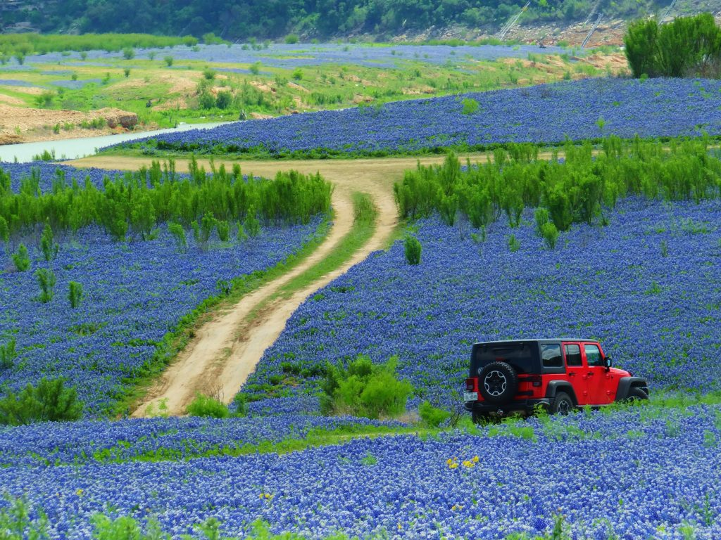 red jeep among the bluebonnets at muleshoe bend recreation area