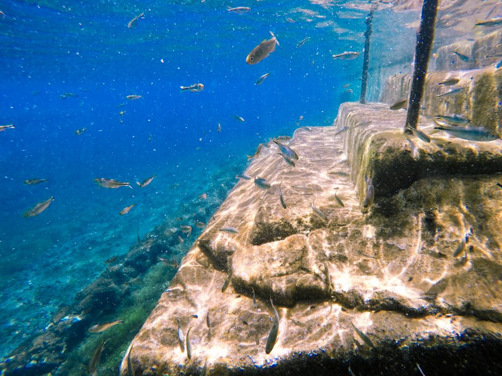 underwater photo of staircase with fish swimming next to it at balmorhea state park, one of the best places to visit in west texas