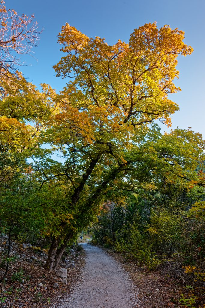 hiking trail in texas with orange tree during fall