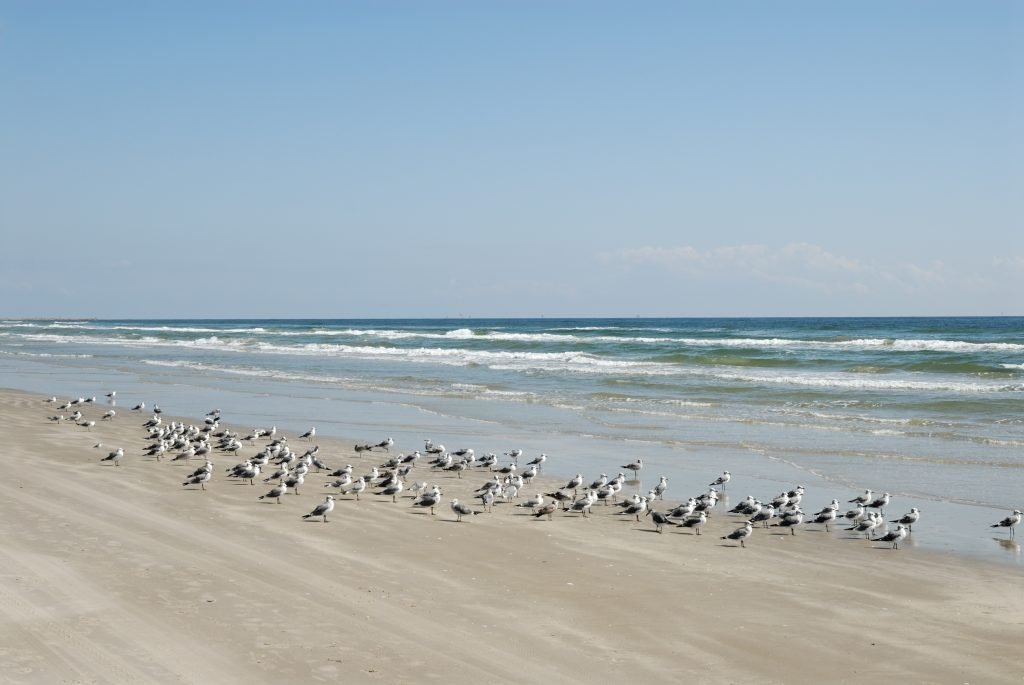 seagulls on a beach on south padre as seen during a long weekend in south padre itinerary