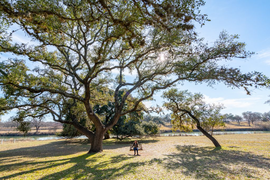 kate storm sitting under a texas live oak at the lbj national historic park
