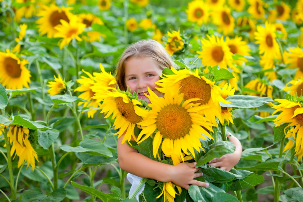 young girl holding an armful of sunflowers in tx