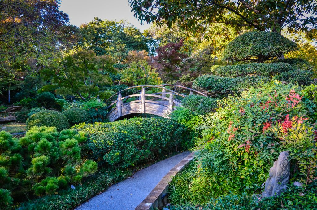 small wooden bridge in japanese garden at fort worth botanic garden, which belongs on any list of what to do in ft worth tx