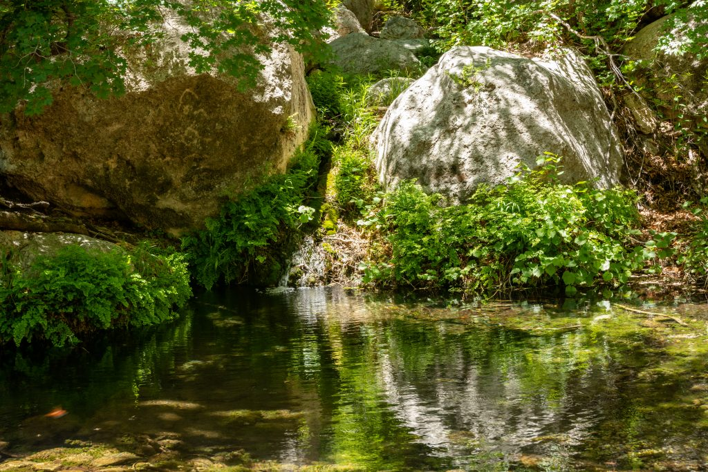 small lake along frijoles ranch trail, one of the best guadalupe national park hiking trails