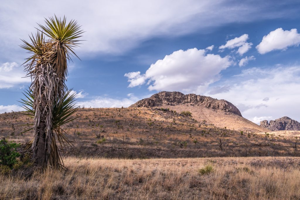 view of davis mountains tx with tree in foreground