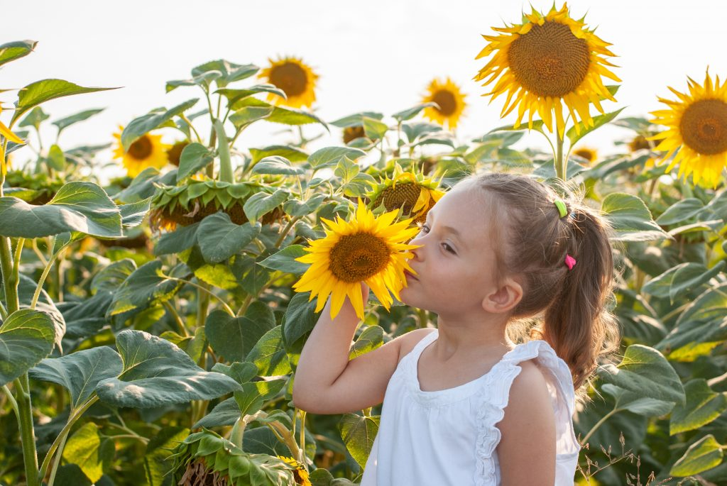 young girl holding a sunflower in a field