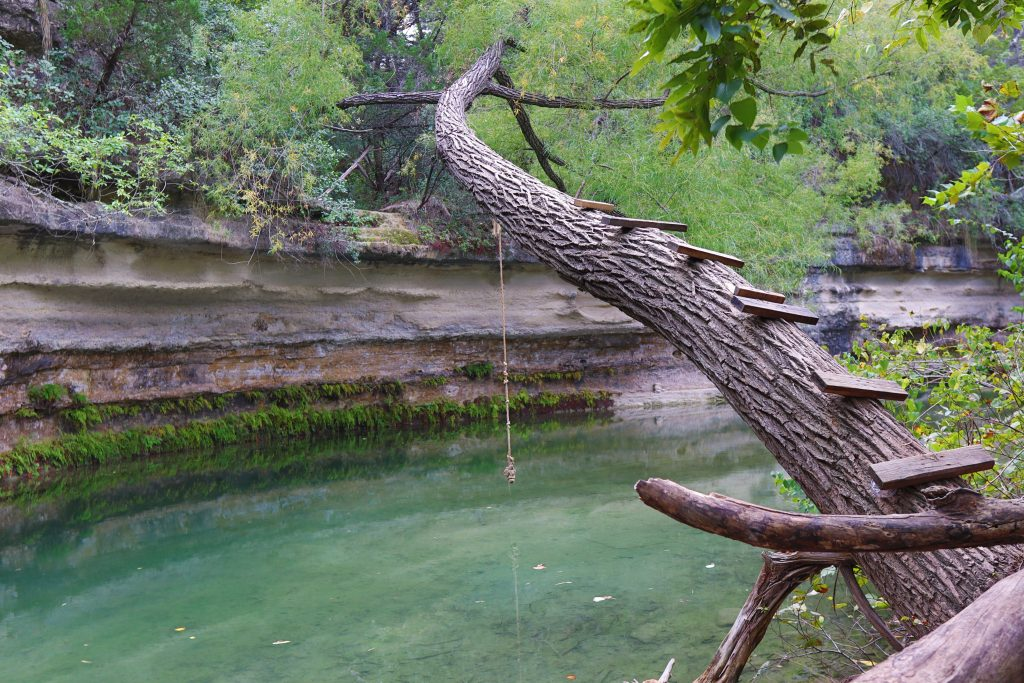 tree with wooden planks leading to a rope swing over the water, a popular setup at the best austin swimming holes