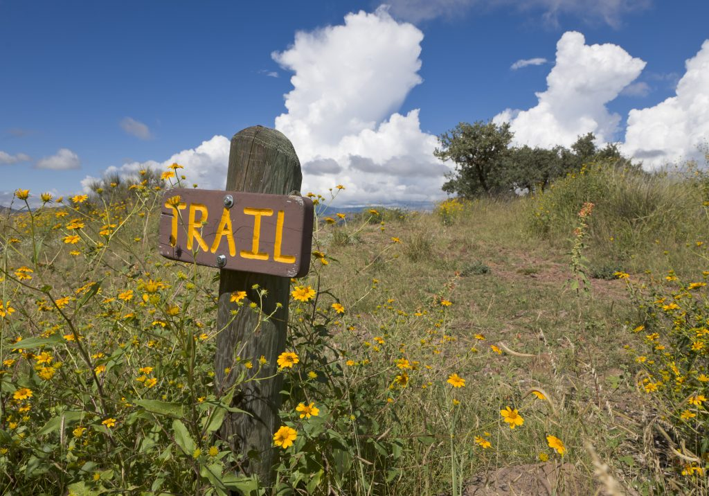 """wood sign with yellow lettering """"trail"""" carved onto it surrounded by yellow wildflowers, as seen when hiking in davis mountains state park texas"""