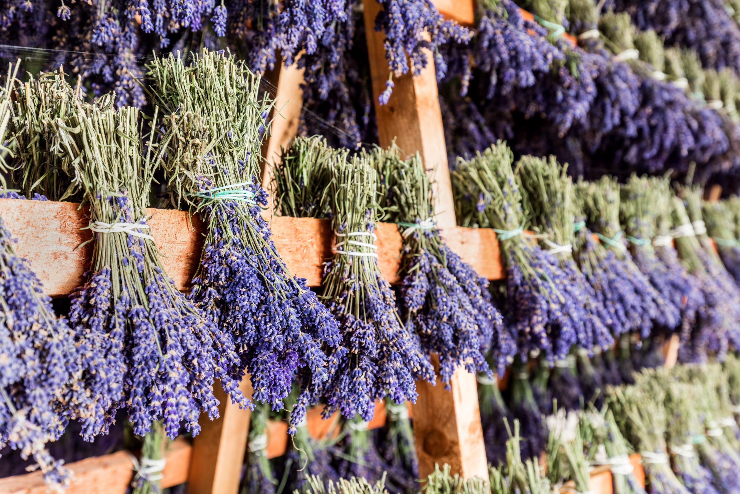 gorup of lavender satchels. lavender farms are one of the best things to do in blanco texas for sale at one of the lavender farms in texas